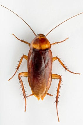 Pest Contol is always needed to control roaches