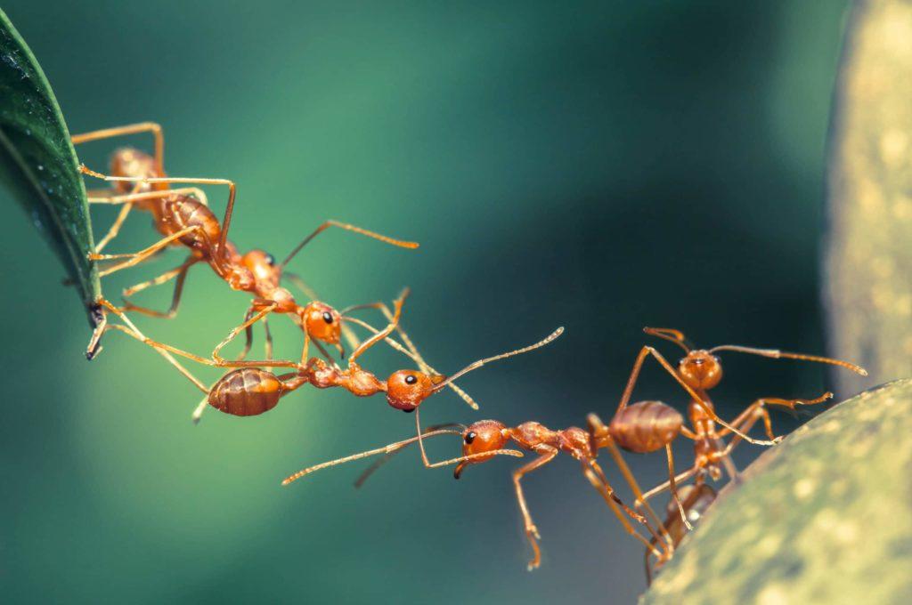 Pest Control Decatur